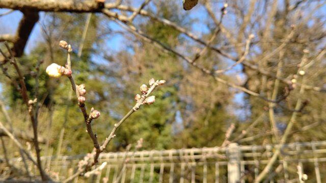 【筑西市】ふれあい農園に春が来た