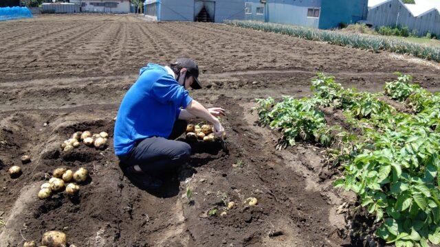 【筑西市】アロー住建のふれあい農園でジャガイモ大豊作でした
