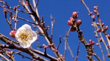 【筑西市】アロー住建のふれあい農園に春が来た!