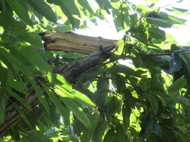「アロー住建のふれあい農園」台風の足跡